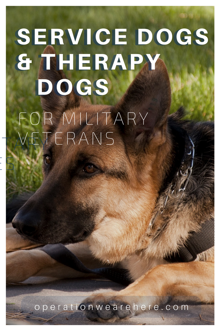Military Service Dogs Therapy Dogs And Companion Pets Veterans